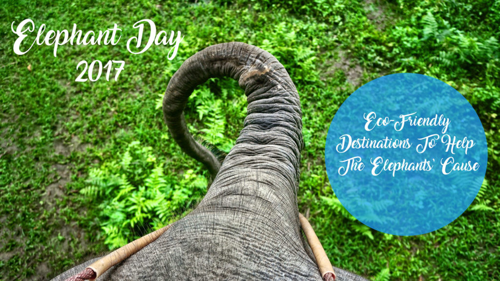 Elephant day 2017 and ecoresorts to meet those amazing animals