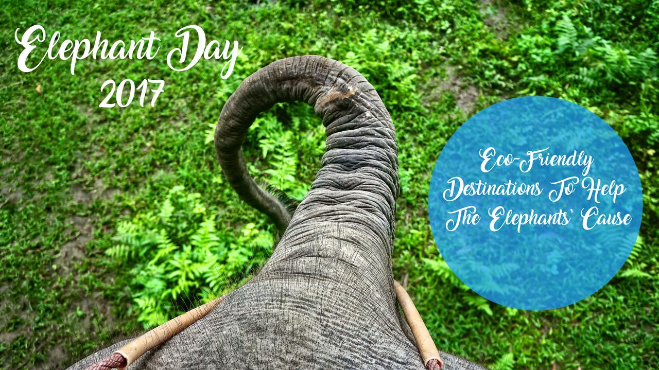 Elephant day 2017 and ecoresorts to meet those amazing animals